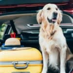 A golden retriever is in the back of an SUV with luggage in Lawrence, IN.