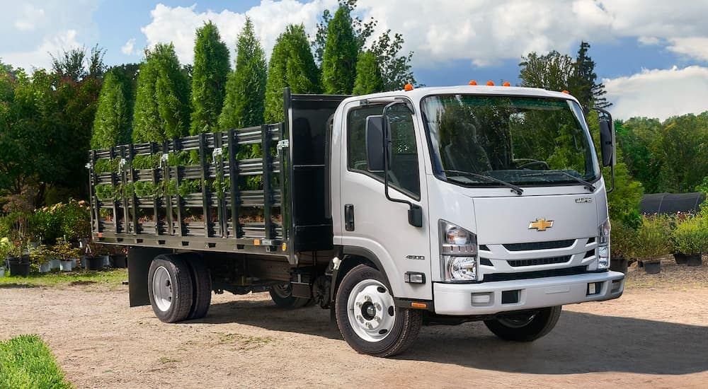 A white 2021 Chevy Low Cab Forward is parked on the dirt in the middle of a plant nursery.