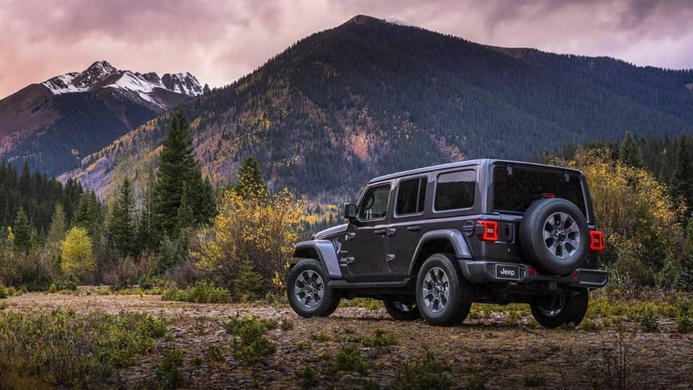 2019 Jeep Wrangler in the brush