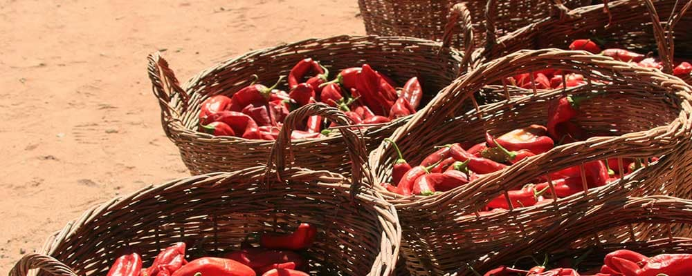 baskets with chiles