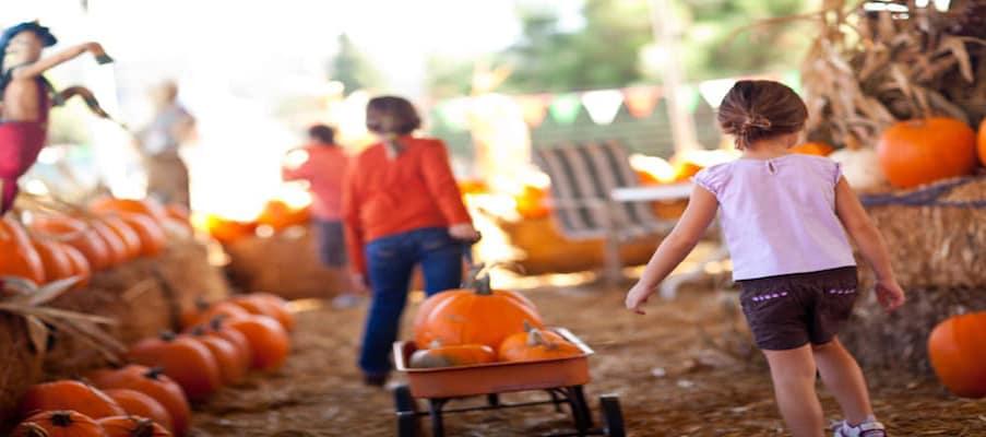girls pulling pumpkins